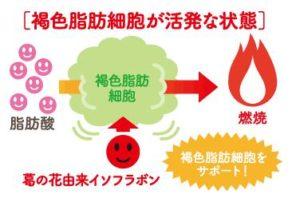 シボヘール 葛の花由来イソフラボン「脂肪の燃焼をサポート」